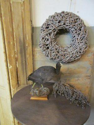 Opgette vogel,preparaat Meerkoet