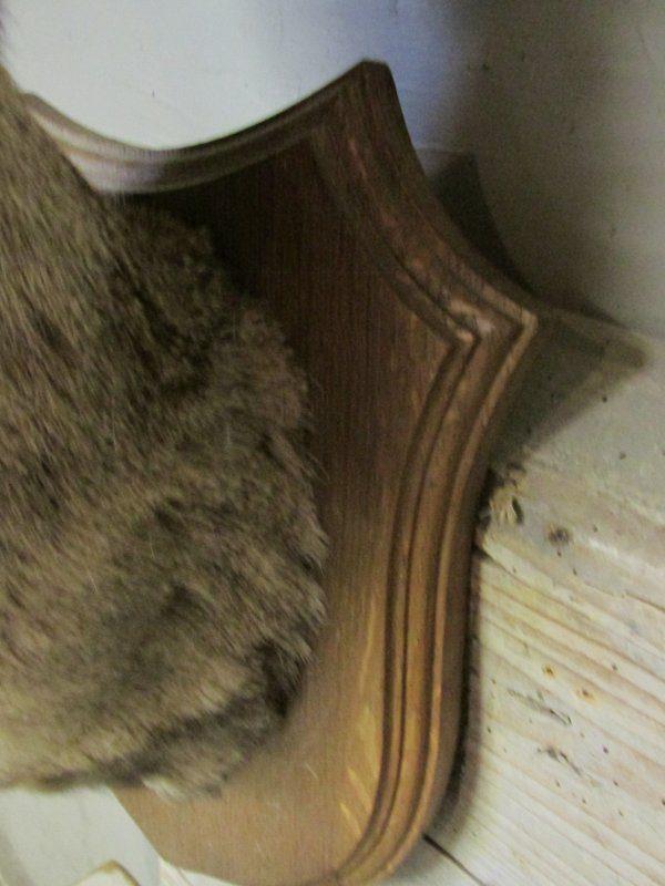 Oud hoofdje van ree met gewei op schild