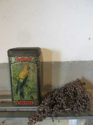 Oud winkelblik van Melle, de gele papegaai