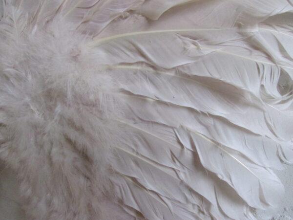 Witte veren vleugels