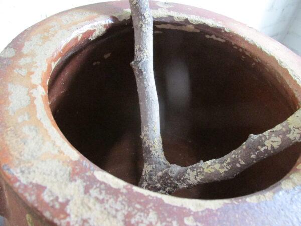Grote oude bruine grespot